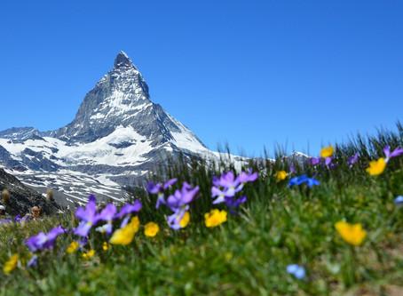 Alpine biodiversity and climate change