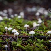 Fungus-JR-201017-022.jpeg