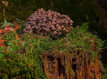 Further fungal factoids