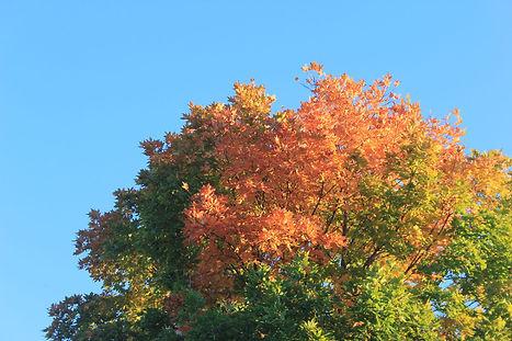 181019_hwnews_tree.jpg