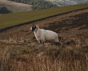 Peak District New Edits-47.jpg
