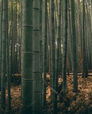 Japan_Kyoto-125.jpg