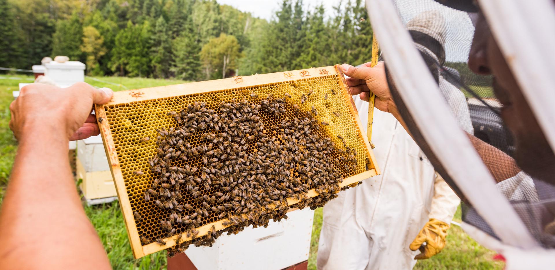 Visites en rucher