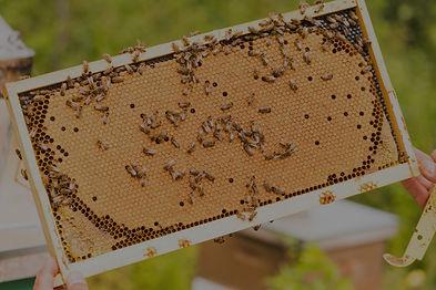 Visites en rucher - Miellerie du cratère de Charlevoix