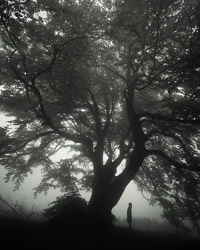 """""""La conversation"""" de Nohed et l'arbre."""