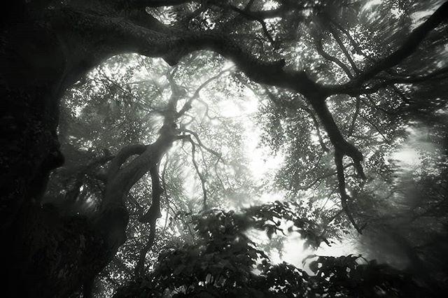 """""""Neurones"""" de Nohed et l'arbre."""