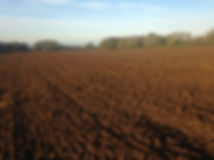 Sowing heritage grain on Zanni's Farm