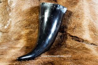 XL Horn