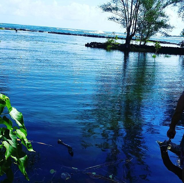 Experiencing #haleolono #fishpond with an amazing #konohiki guide