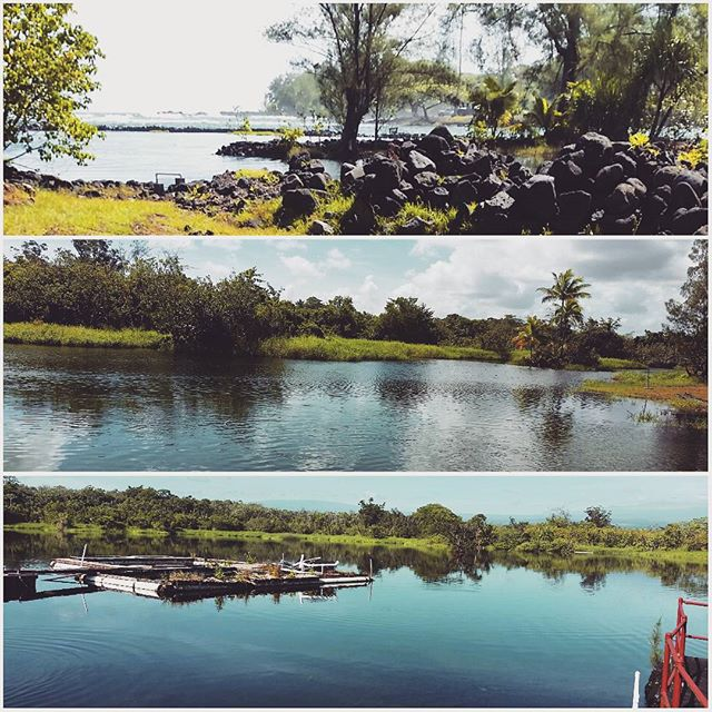 The #fishponds of #keaukaha. A monday fishpond kinda morning. #fishpondscience #sedimentcores