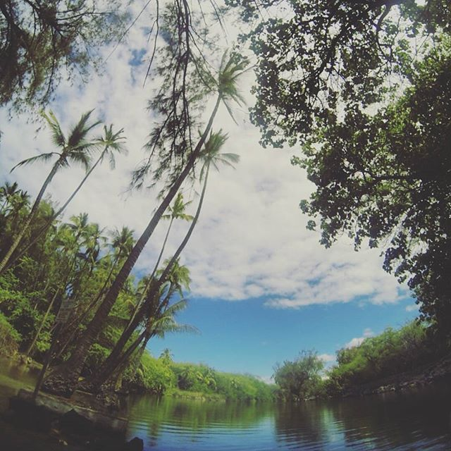 Experiencing the majestic #kiholo #fishpond