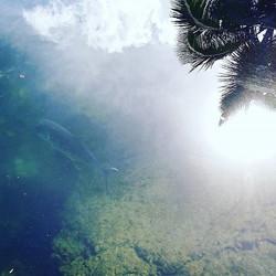 #lokowaka #fishpond.jpg the #ulua pond.jpg #keaukaha