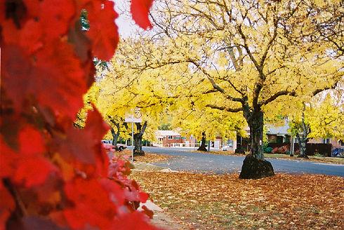 Andrew Warren - Crookwell Autumn.jpg