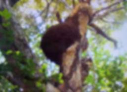 タカサゴシロアリの巣