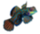 ニシキテグリ3_edited.png