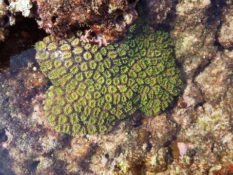 サンゴが生きている