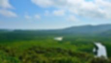 島を覆うマングローブ林
