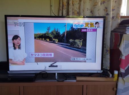 全国区ならぬ九州、沖縄。