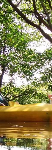 満潮時はマングローブ林の中まで