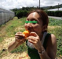 マンゴーを食べる