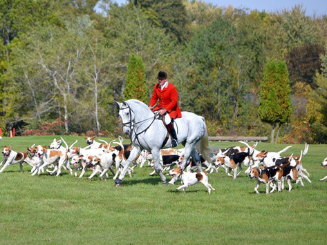 From Fox-Hunting to Equine Therapy
