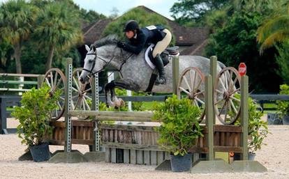 Warmblood Horse Appraisal