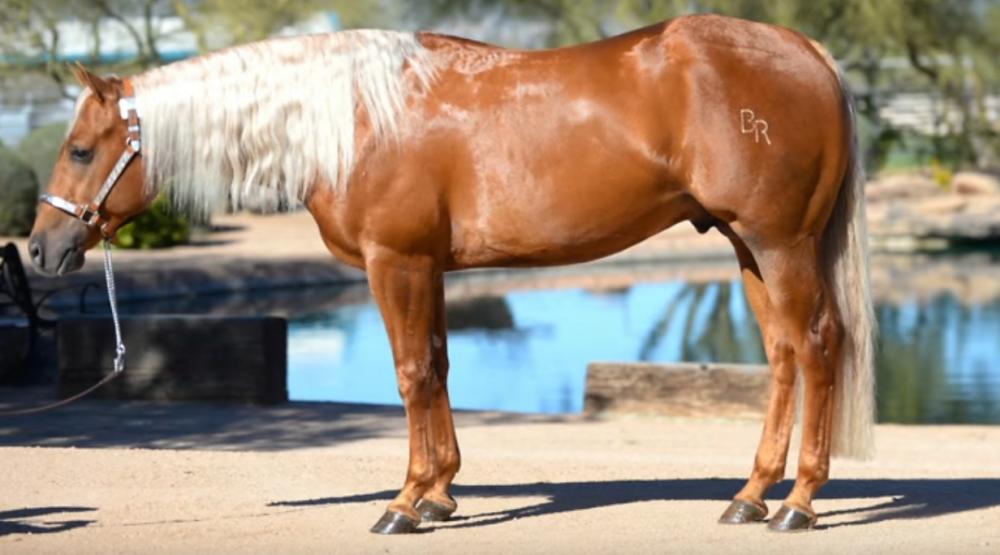California Horse Appraiser