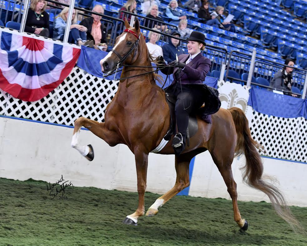 Ohio Horse Appraiser