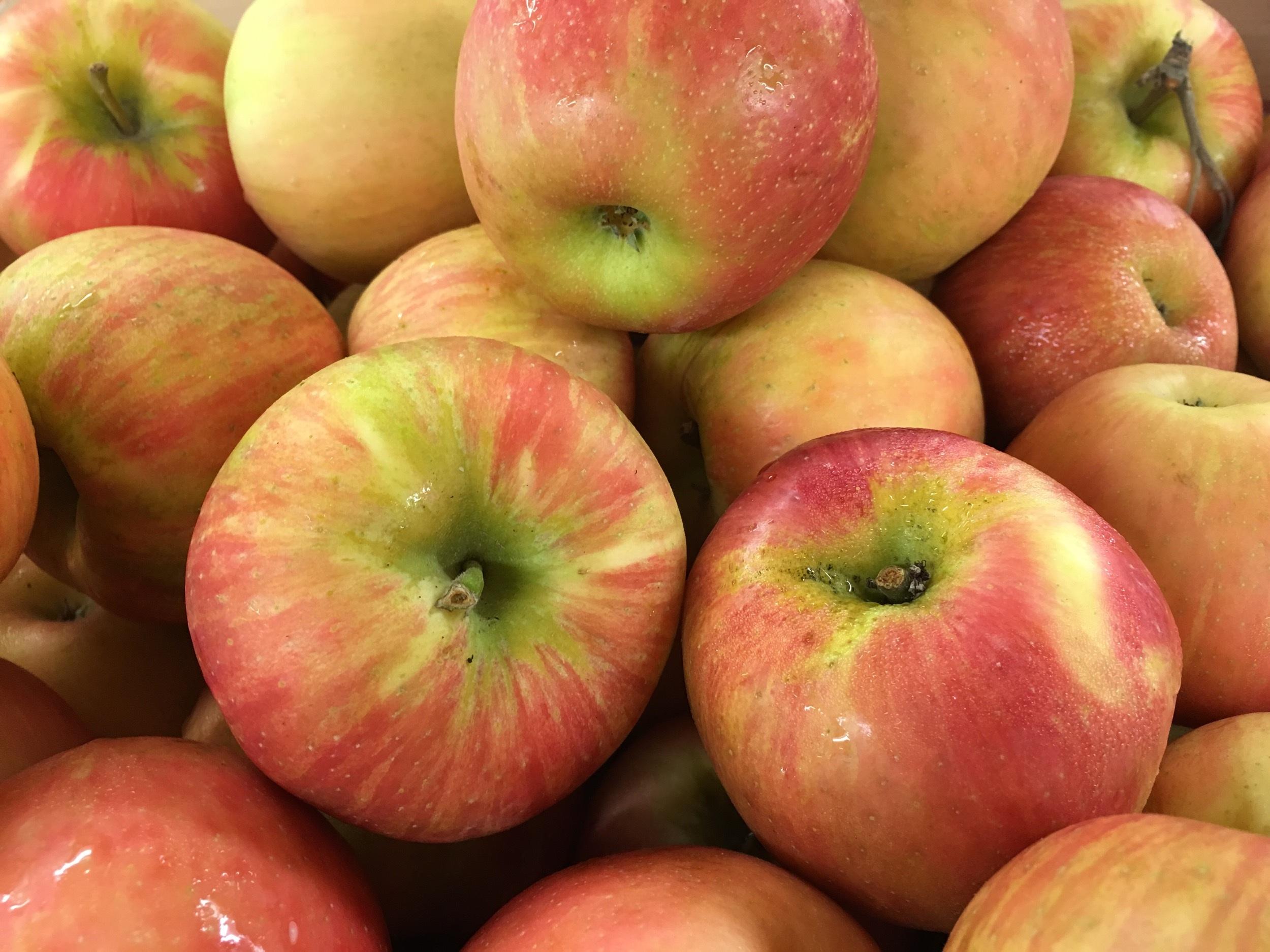 apples-1947711