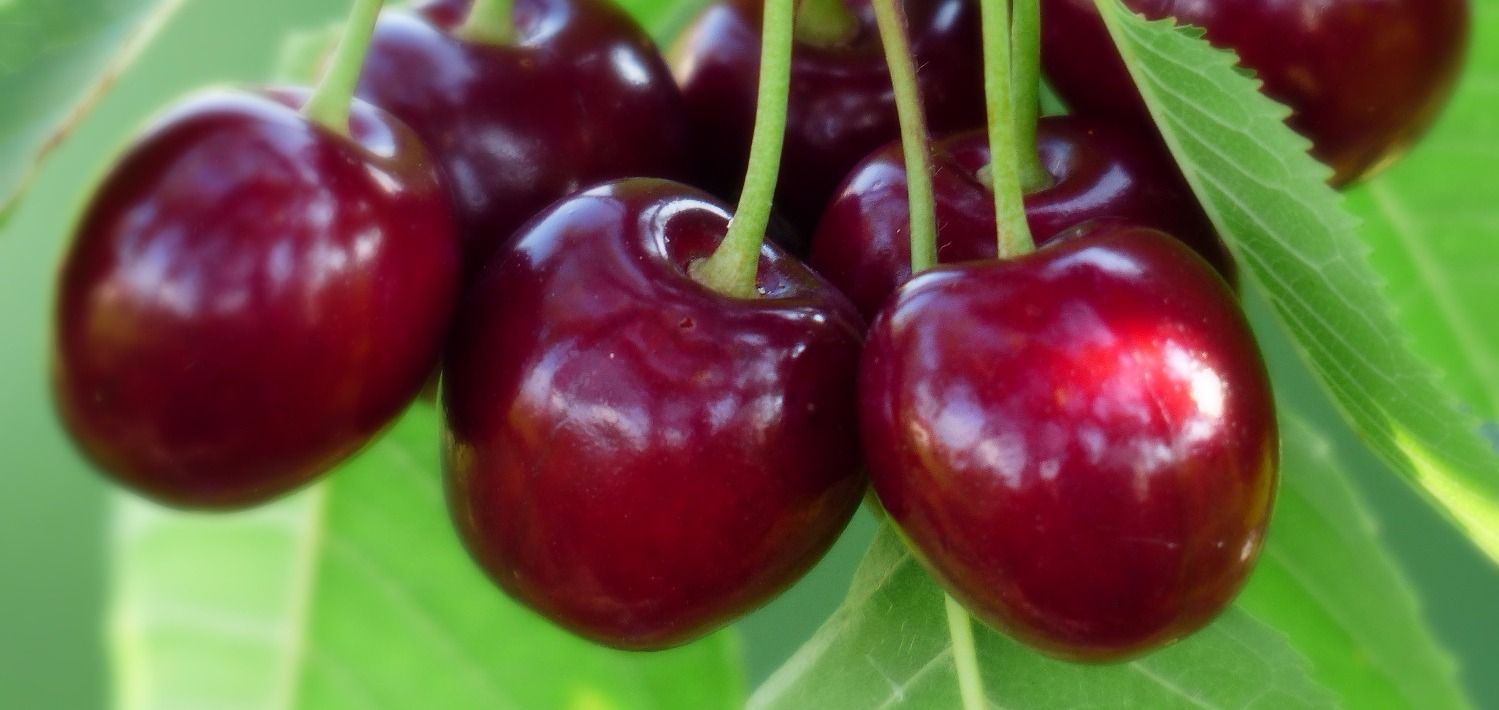 cherry-167341_edited_edited