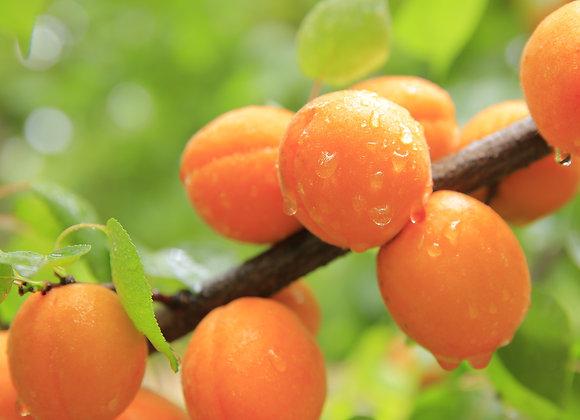 Corral Cot Apricots