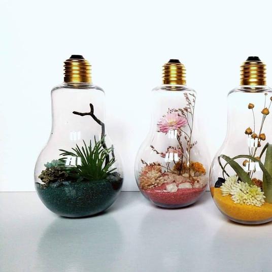 @Nymphea Botanique.jpg