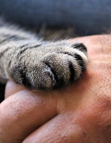 cats-paw.jpg