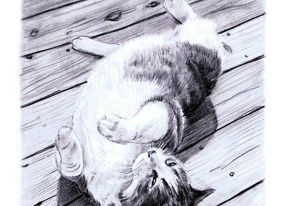 Sun bathing kitty