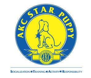 A.K.C Star Puppy