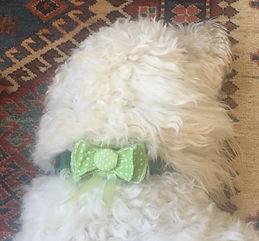 Small Bow on Dog.jpg
