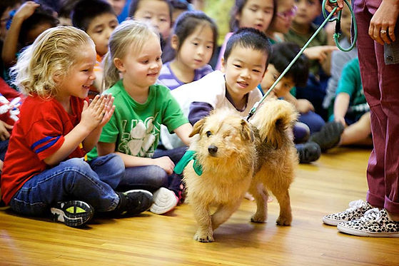 Therapy Dog teaching Elementary School Character Education Curriculum and Assembly