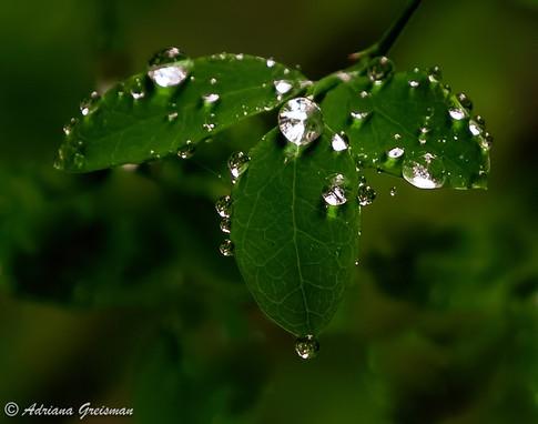 Wet-Diamond-Leaf-Rainforest.jpg