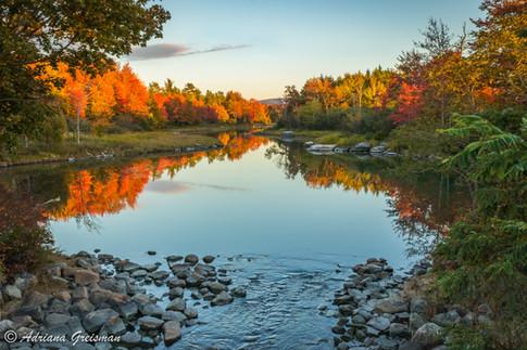 Fall-Color-Autumn-Bar-Harbor-Maine.jpg