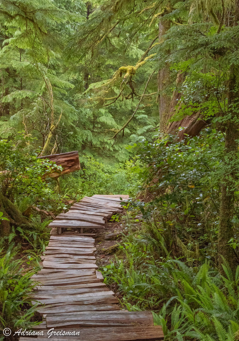 Tofino-Meares-Island-Forest-Path.jpg