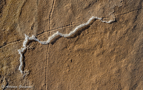 Death-Valley-National-Park-Salt-Snake-Ab
