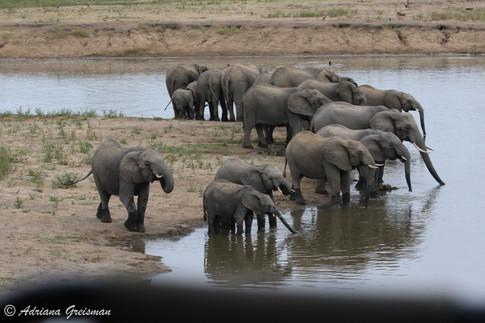 Elephants-Krueger-Watering Hole-wildlife