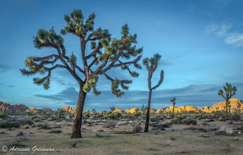 Joshua-Tree-National-Park-Sunset.jpg
