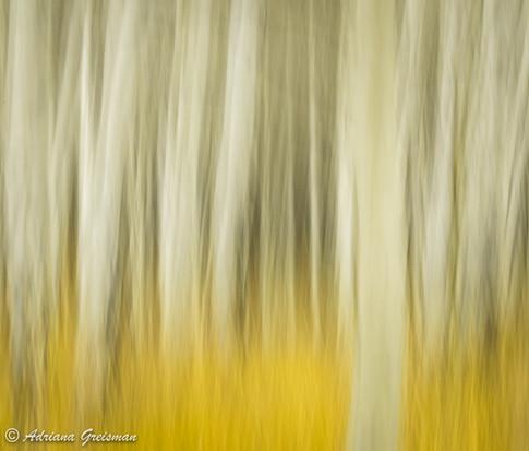 Aspen-Fall-Autumn-Color-Fallen-Leaves-Fo