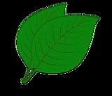 GreenLeaf02.png