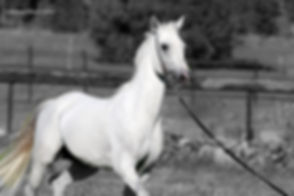Un cavallo del maneggio di Chia