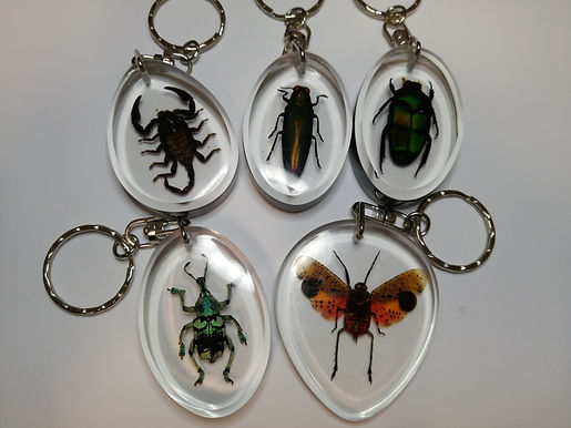 Insect Keychains