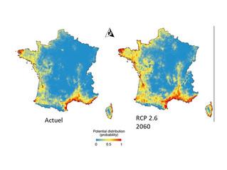 Expansion de l'Herbe de la Pampa en France sous l'effet du réchauffement climatique ?