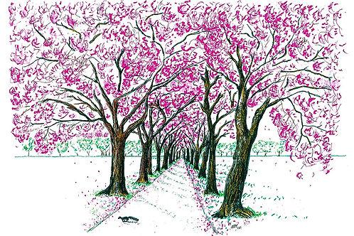 Blossom Walkway