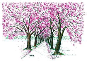 blossom walkway edin inky fox.jpeg